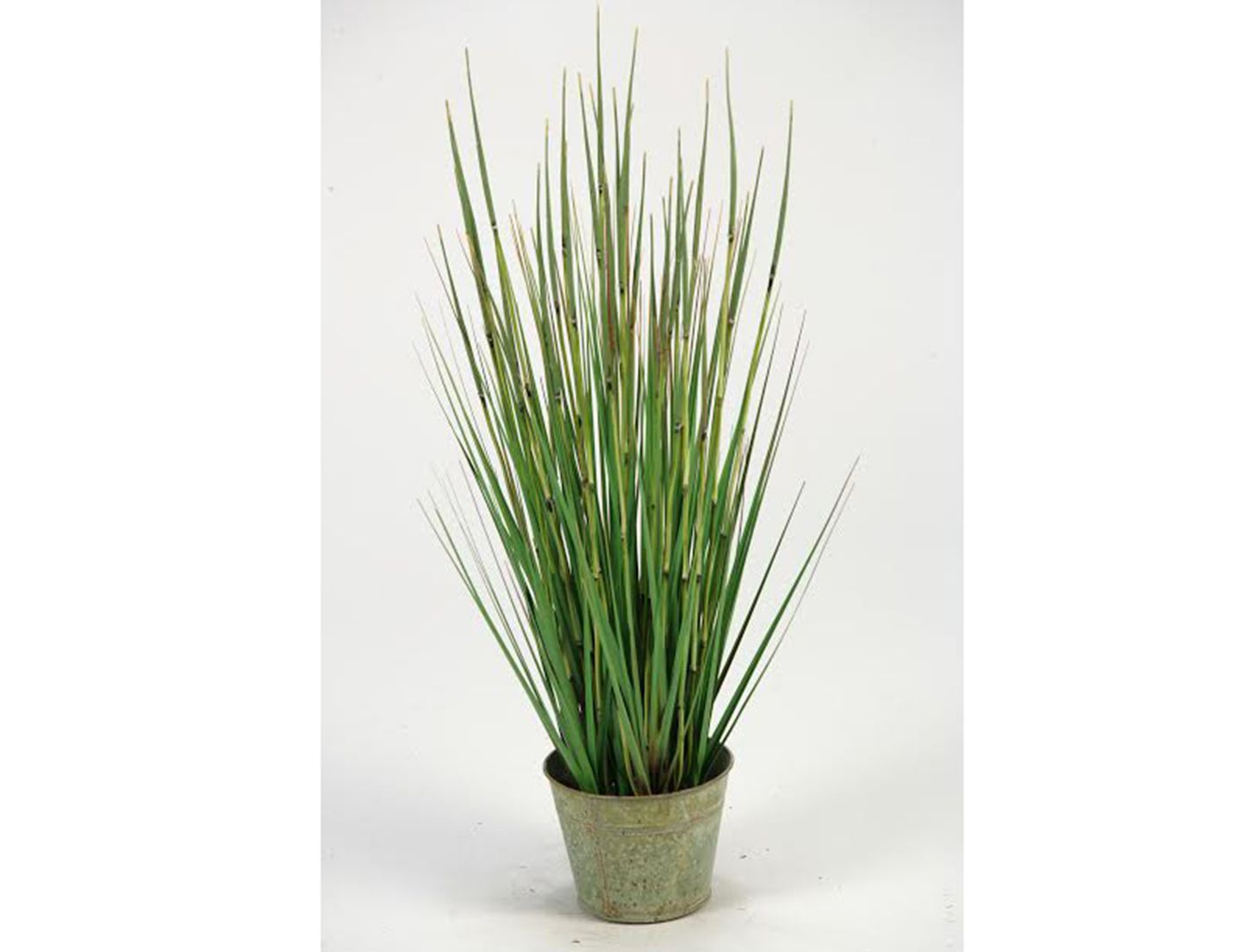 Small Onion Grass in Planter (With images)   Metal ...