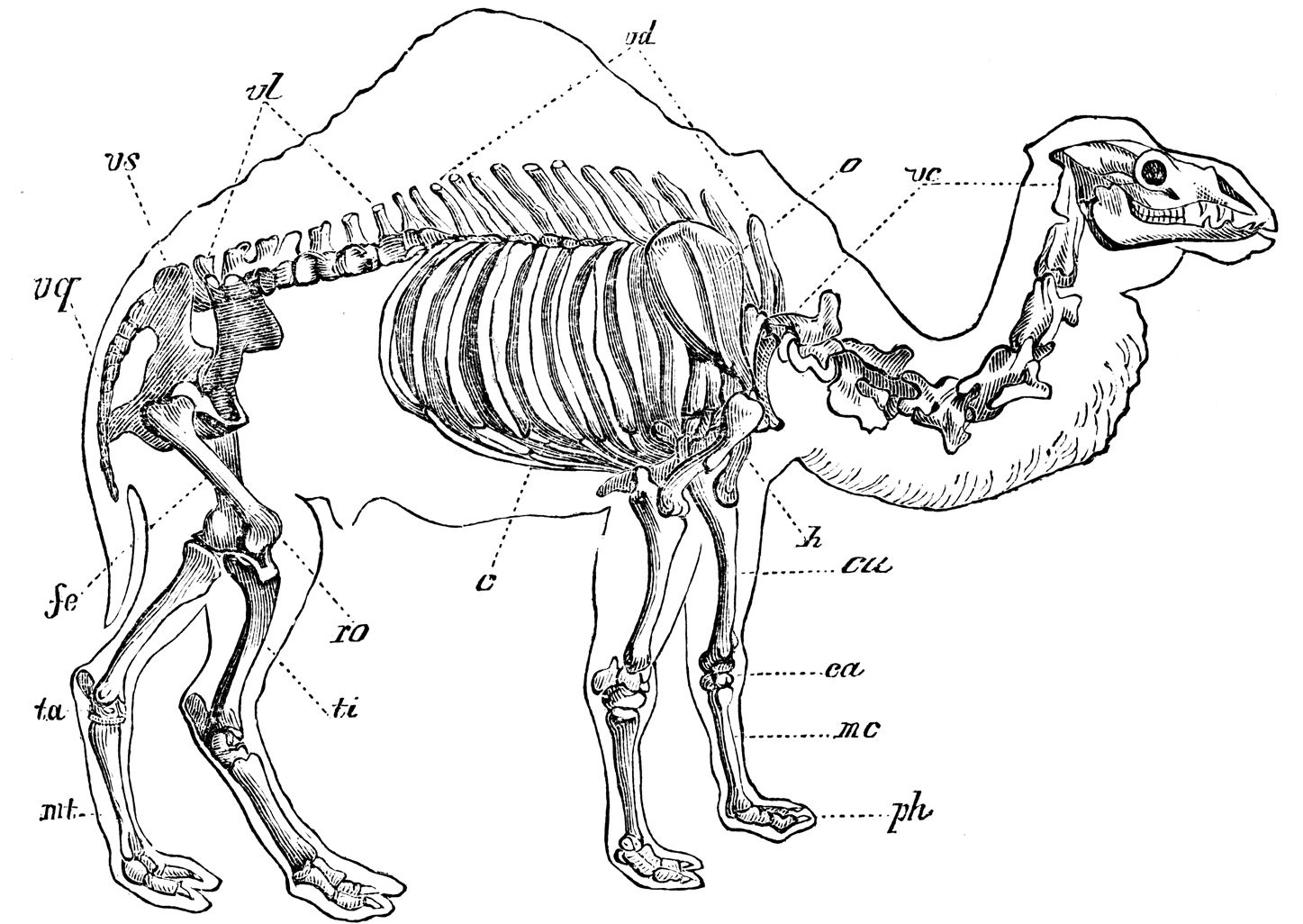 Pin By Sharon R On Animal Anatomy