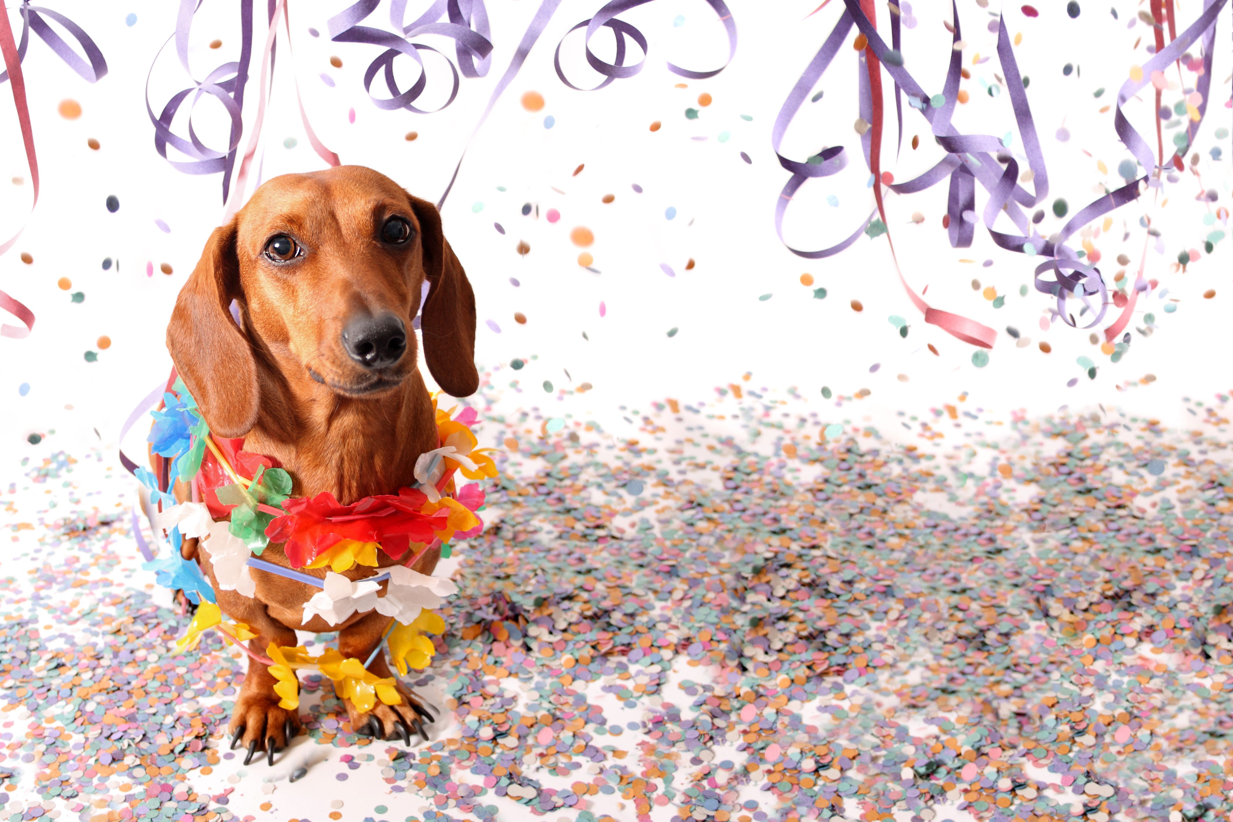 Plan An End Of Summer Party With The Secret Life Of Pets 2 And This Mom Approved Activity Kit Secret Life Of Pets Dog Photoshoot Pet Photography Pets