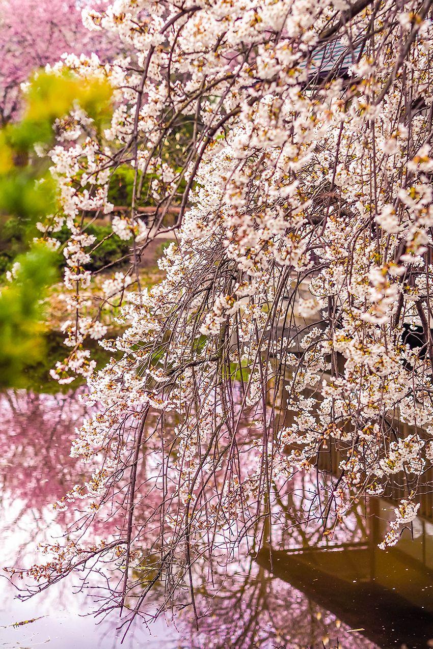 Wien Setagayapark Japanischer Garten Mitten In Dobling 21 Weitere Fruhlingshafte Foto Hotspots Japanischer Garten Japanischer Garten Wien Kleiner Japanischer Garten