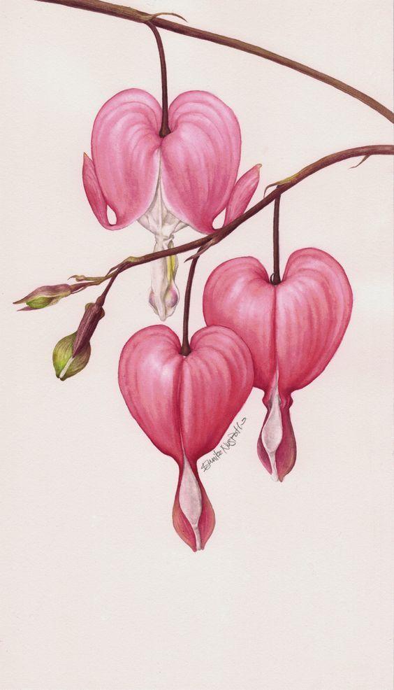 Eunike Nugroho Dicentra The Bleeding Heart 564 986 Flower Drawing Botanical Painting Botanical Illustration Tattoo