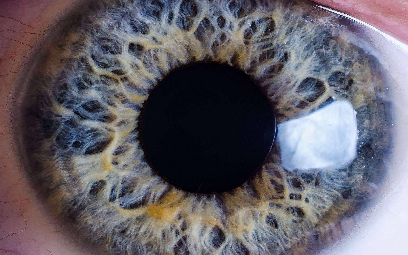L œil Humain Et Son Fonctionnement En 12 Images œil Humain Yeux Iris Oeil