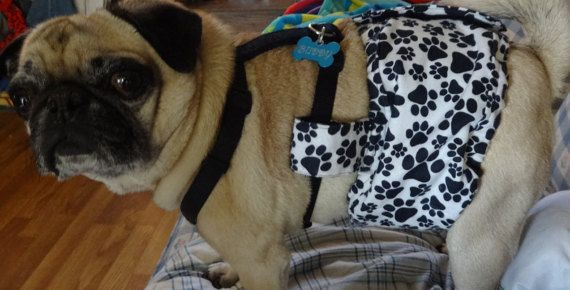 Male Dog Diaper Belly Band That Stays On Straps Attach To Any