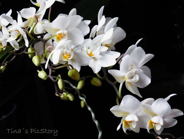 orchid-wild-12-11-1.JPG (640×483)