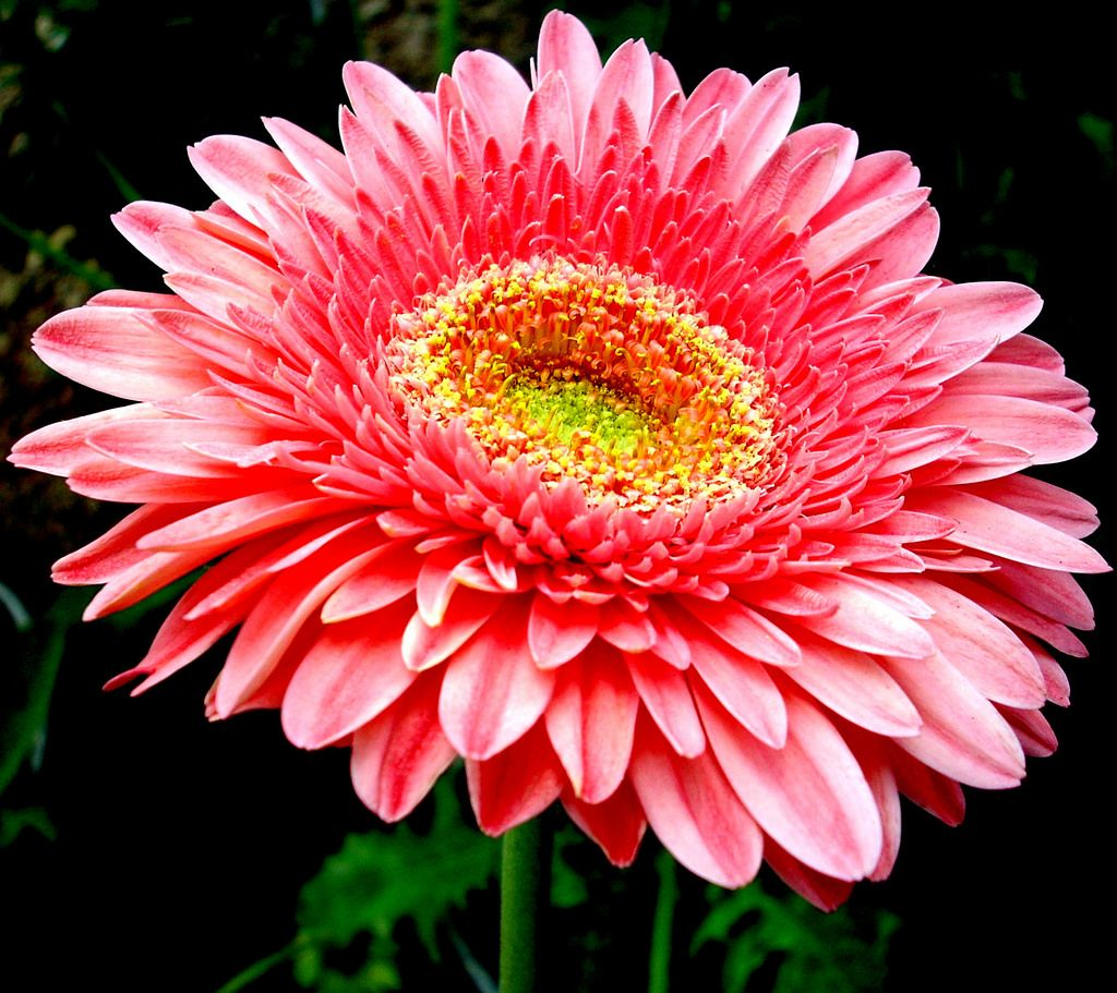 163 Beautiful Types Of Flowers A To Z With Pictures Flower Types