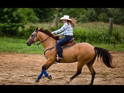 Horse Massage Benefits For All Disciplines With Dick Huntzinger Horsemassagers Com