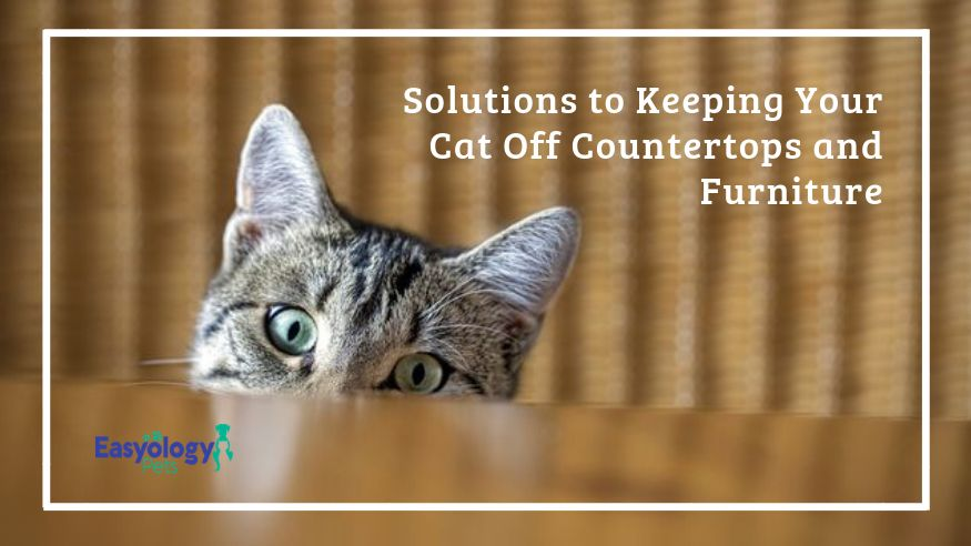 How to Keep Cats Off Counters and Furniture (With images