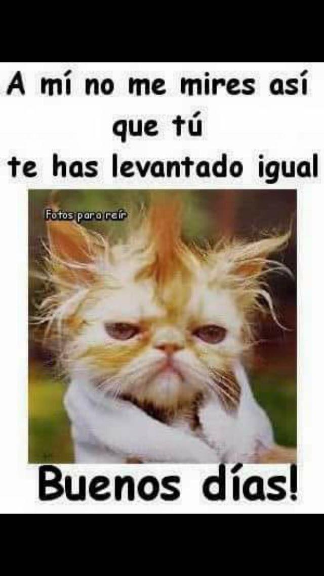 Pin By Yolanda Munoz Munoz On Animales Y Mascotas Good Morning Funny Humor Good Morning