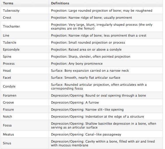 Bone Marking Terminology Everything Pa Pinterest Medical