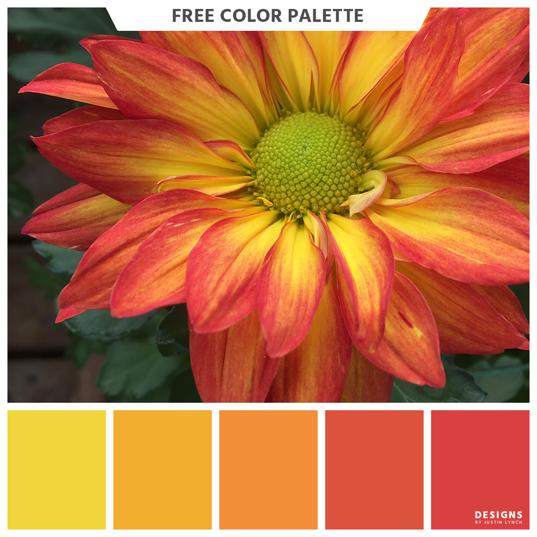Fiery flower color palette. Red, orange, yellow, green ...