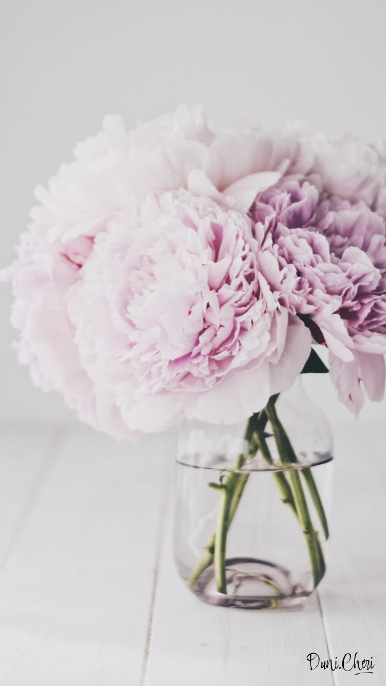 Peonies Pfingstrosen Wallpaper Free Download Flowers Pinterest