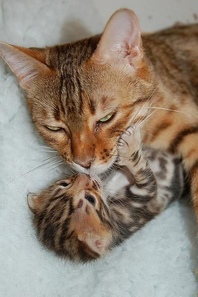10 Mom Cats And Their Precious Kitties Beautiful Cats Pretty