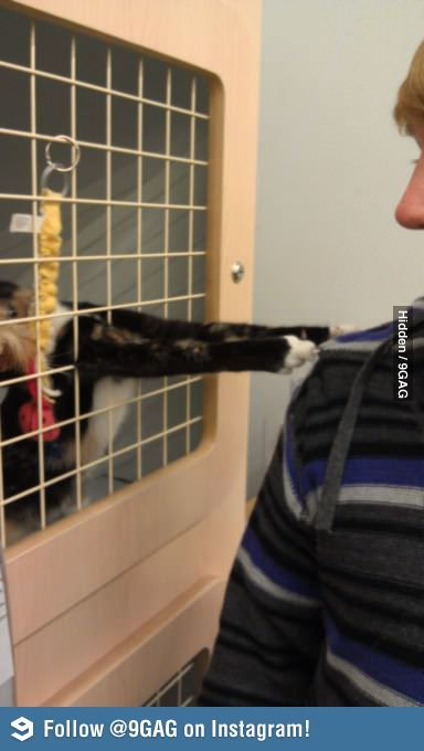 This cat really wanted me to adopt him.