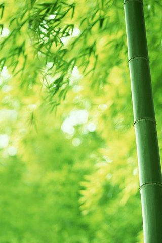 Bamboo Android Themes Android Mobile Wallpapersapps
