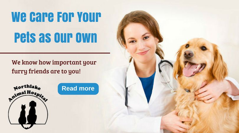 Best and Affordable Veterinarian Services Emergency vet
