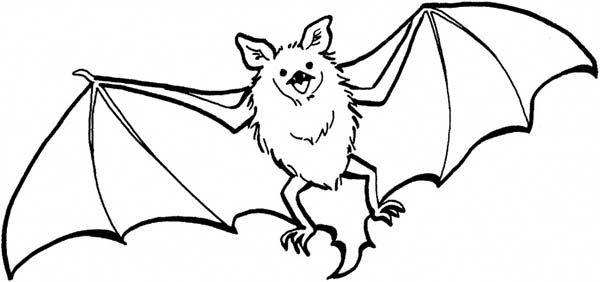 Bats Flying Coloring Page Color Luna Bat Coloring Pages