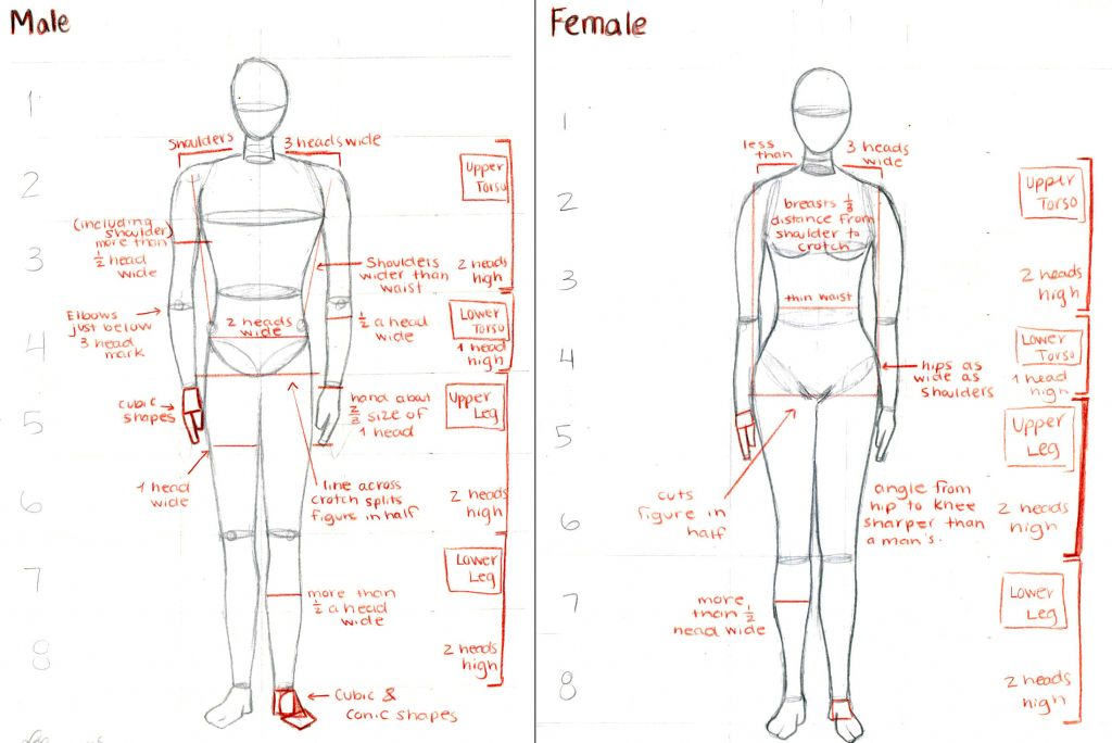 Difference Between Male And Female Anatomy Male And Female Anatomy