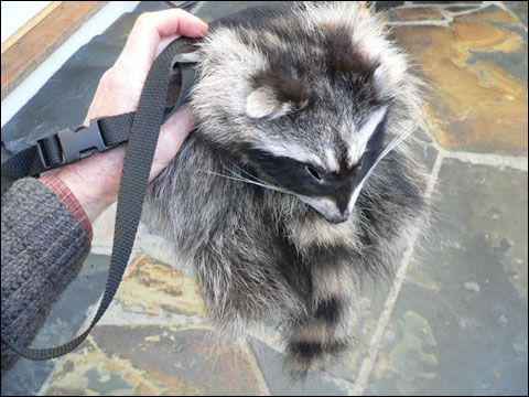 I need to make one of these raccoon shoulder bags from the