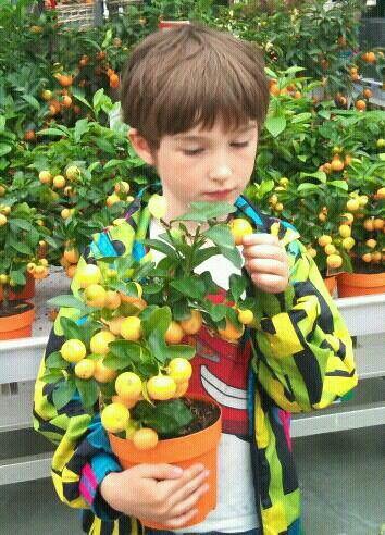 Appelsiiiin