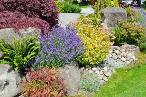 sonniger Steingarten anlegen gestalten und bepflanzen-tipps