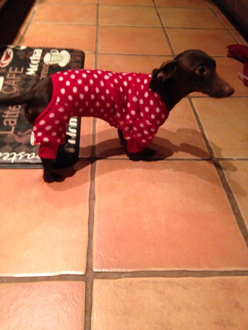 My dog outfit