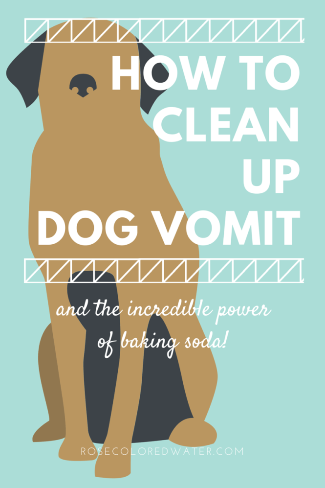 how to clean up dog vomit