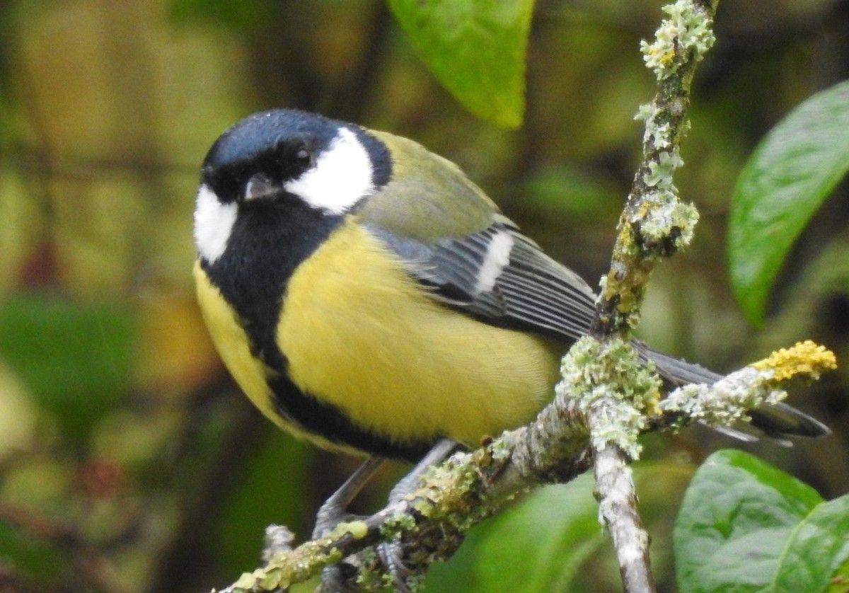 9 Oiseaux Predateurs De La Chenille Processionnaire Du Pin