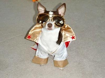 Gallery Of Fame Look At Me Art Work Pet Halloween Costumes