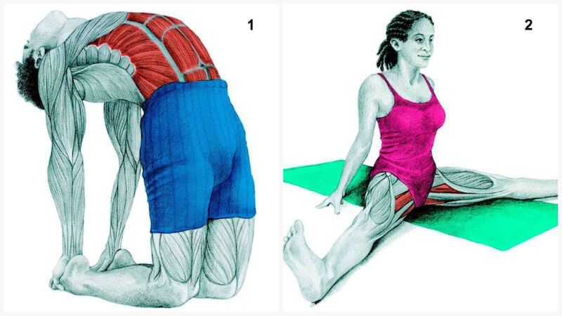 See which muscles you are stretching.