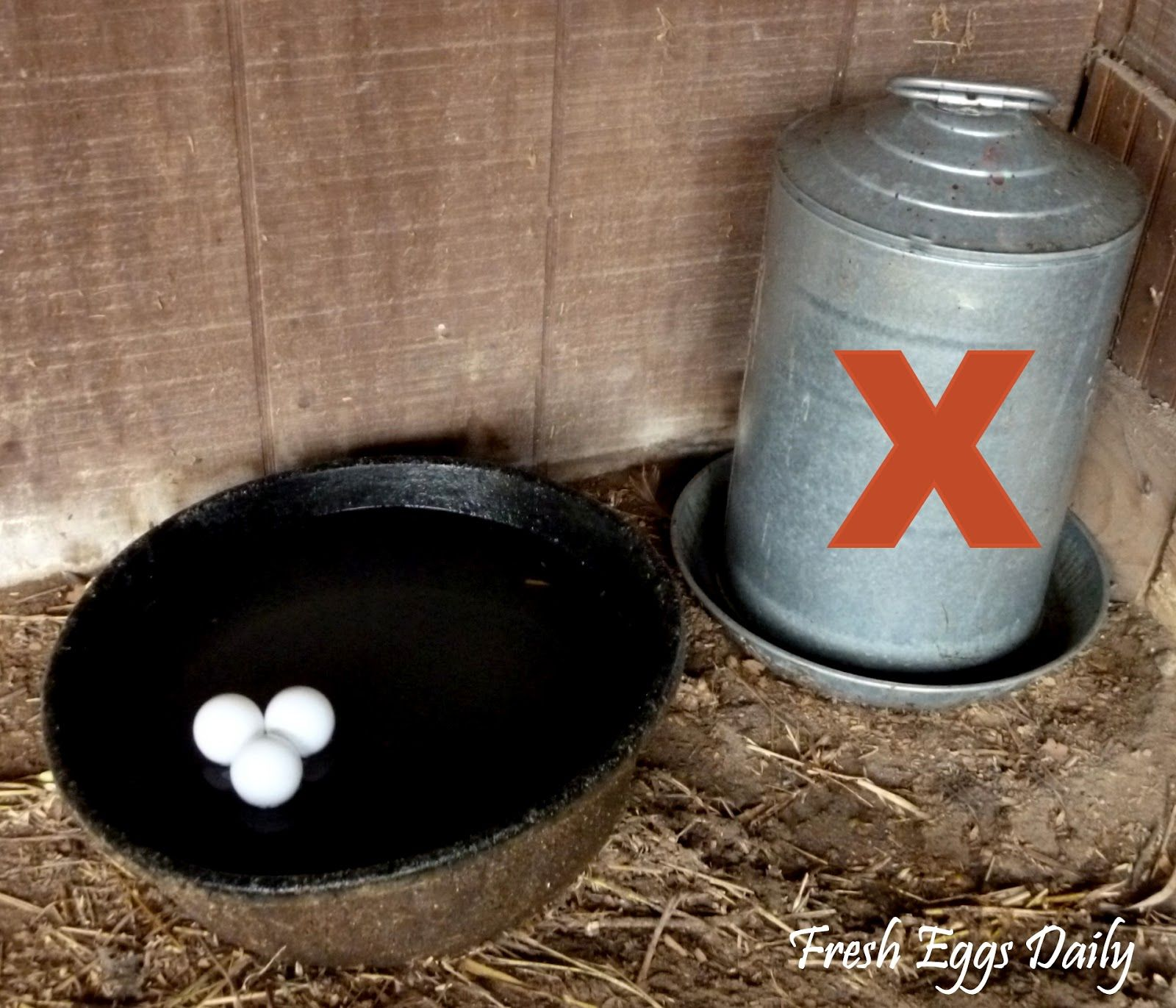Fresh Eggs Daily® Cold Weather Winter Prep Tips