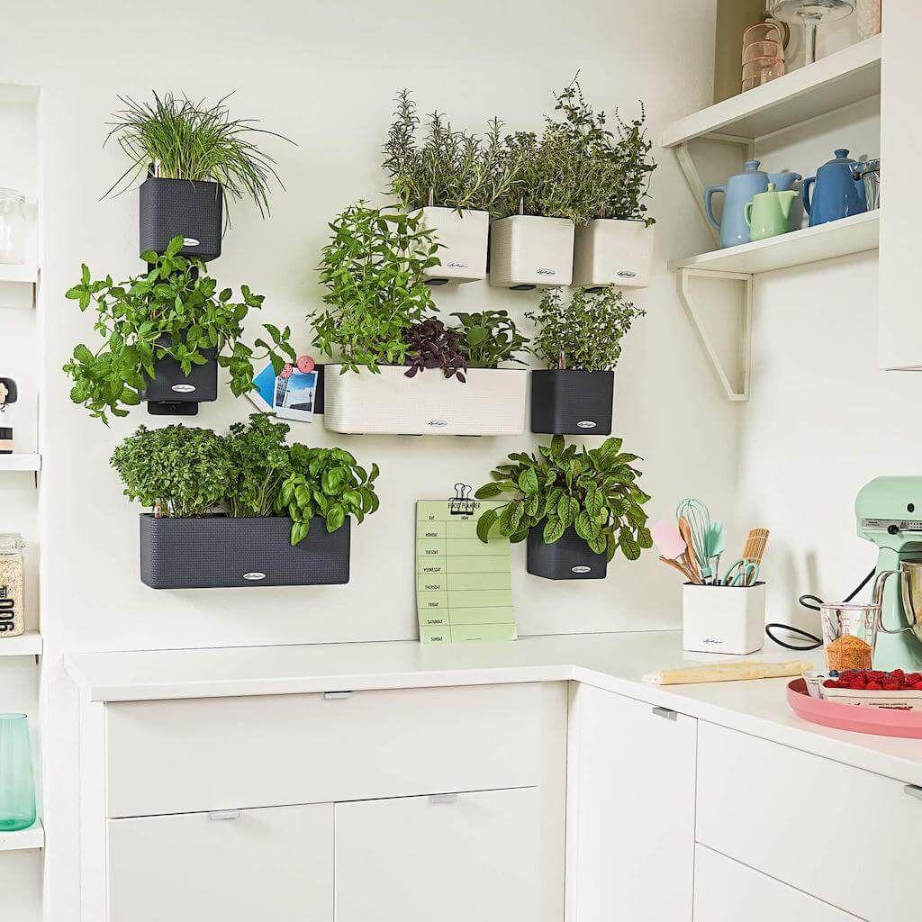 Ciemnoszara Doniczka Z Nawadnianiem Lechuza Cube Color 14 Plecionka Green Wall Garden Green Wall Color Wall Garden