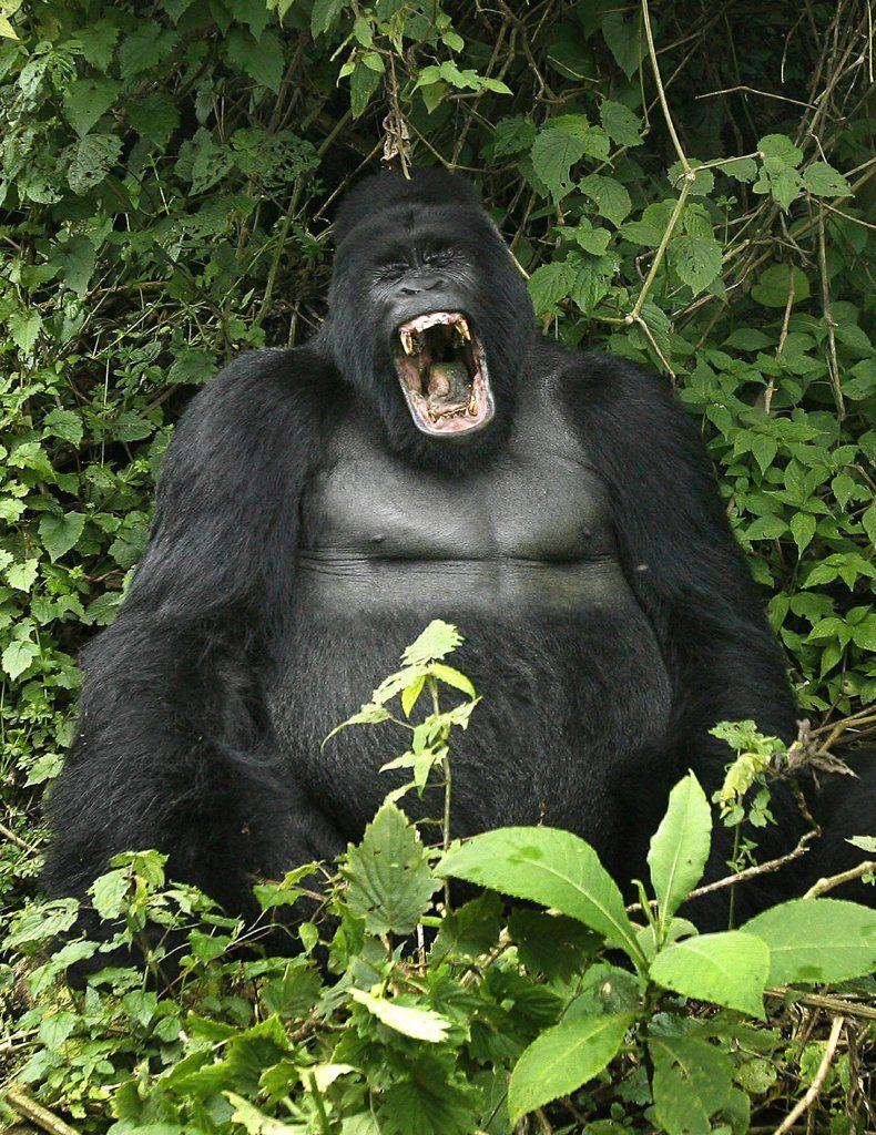 Endangered Species Among World's Most Endangered