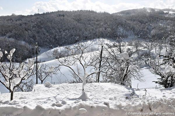 piano piano la neve si scioglie... - http://www.erbaviola.com/2013/03/04/neve-che-si-scioglie-fili-di-paglia-che-arrivano-nellorto.htm