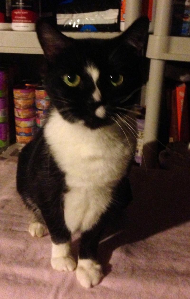 Adopt MIDNITE on Petfinder No kill animal shelter, Cute