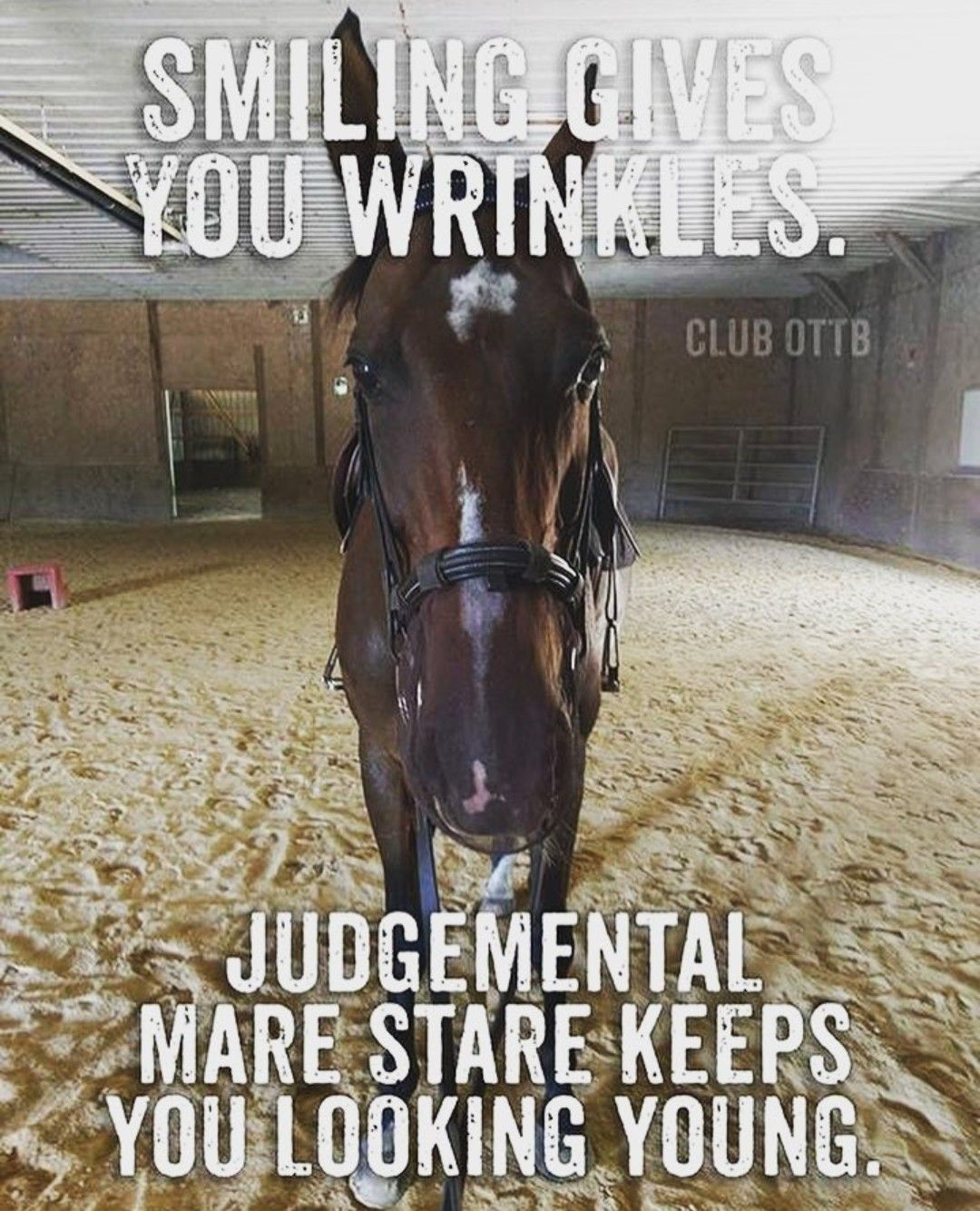 Pin On Horse Memes