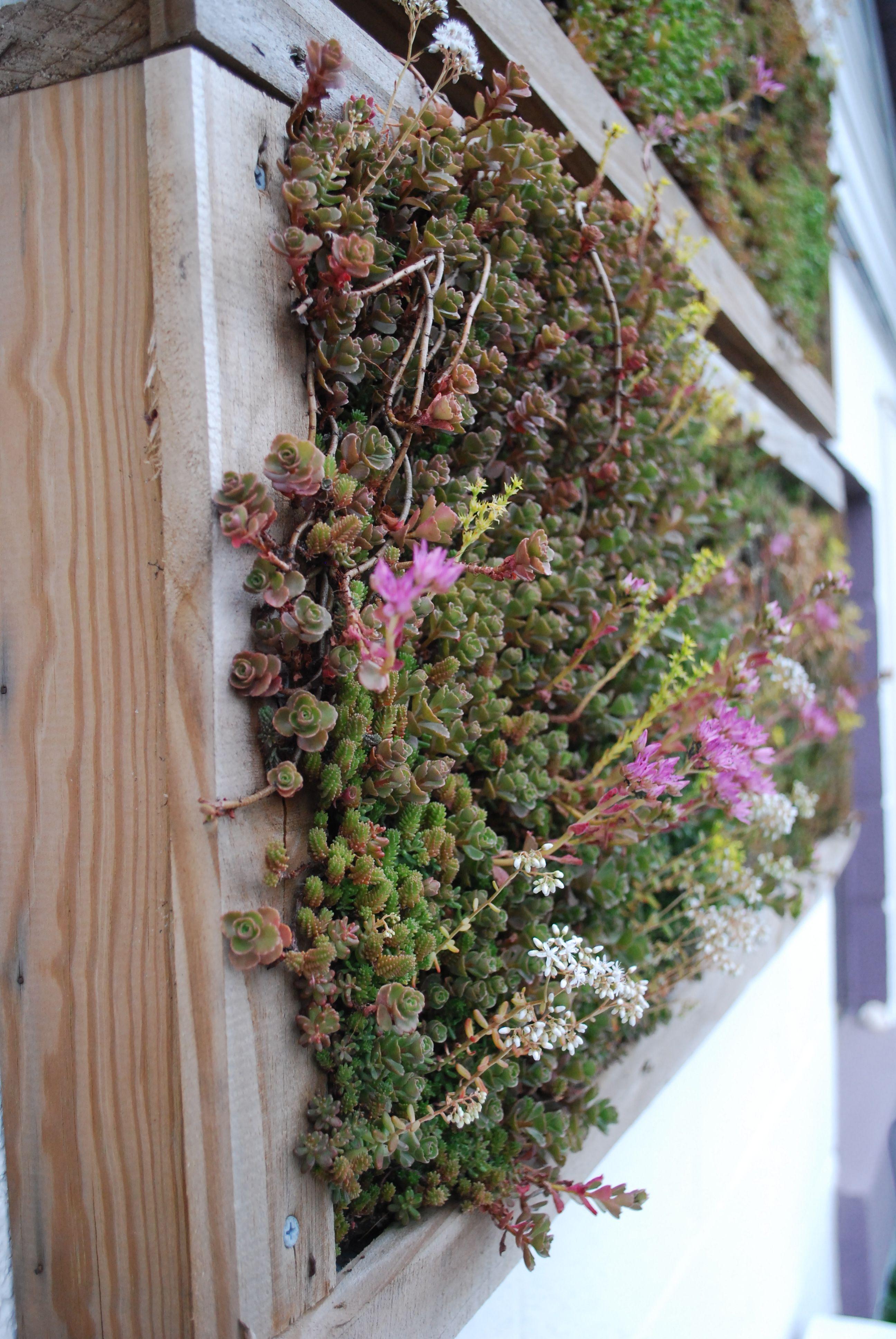 Vertical wall garden planters   My Garden   Pinterest   Walled ...