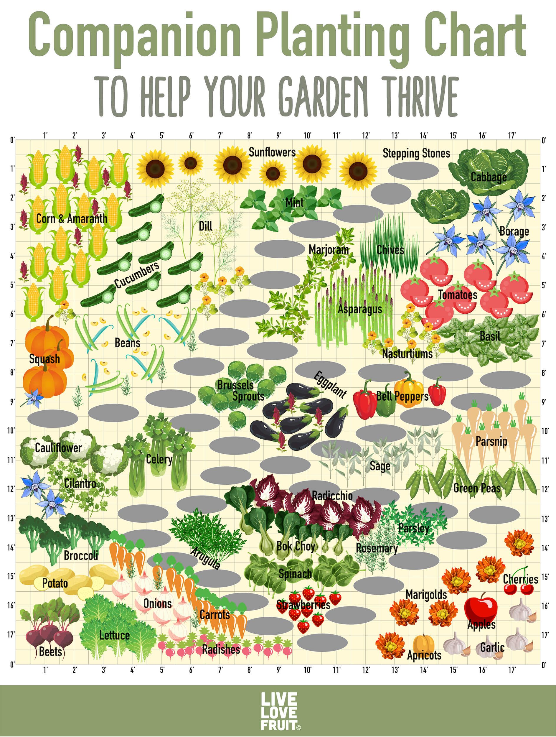 Find out which fruit and vegetables should and shouldnt be planted together with our companion planting chart for some of the most popular garden foods