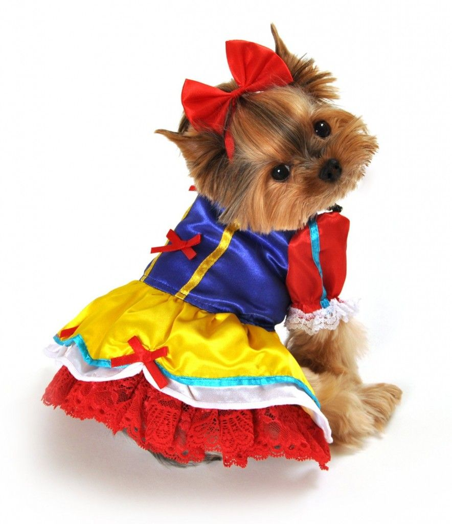 Top 10 Cutest Dog Costumes For Small Dogs Princess Dog Costume