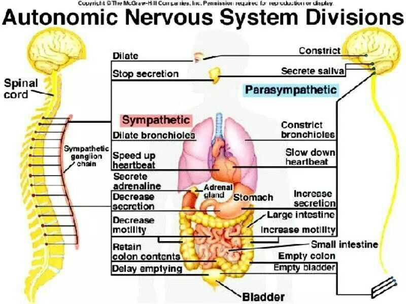 Pin by Tracy Ashenbrenner Claseman on Dysautonomia