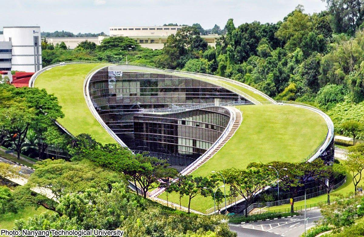 Design Dautore Com Green Roof Art School In Singapore