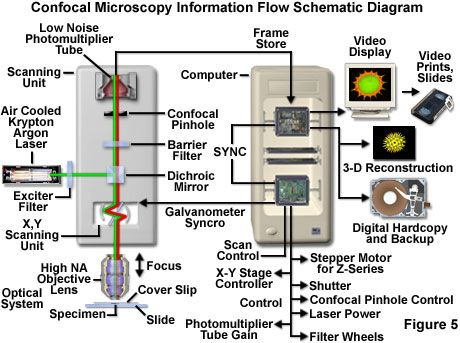 Confocal microscopy information flow schematic diagram confocal microscopy information flow schematic diagram ccuart Image collections