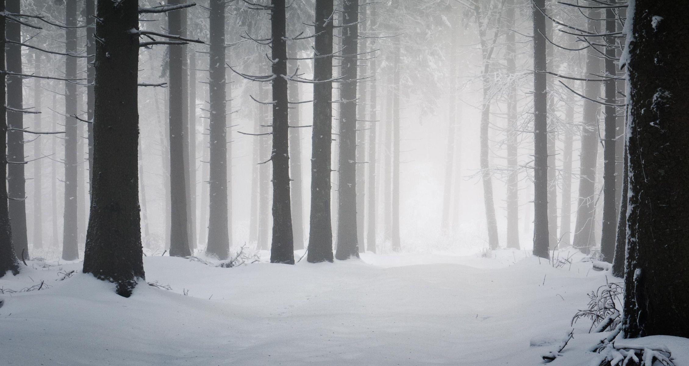 Snowy Forest High Definition Wallpaper Hd Wallpapers Snow Forest Snowy Forest Winter Forest Hd wallpaper snow winter forest trees