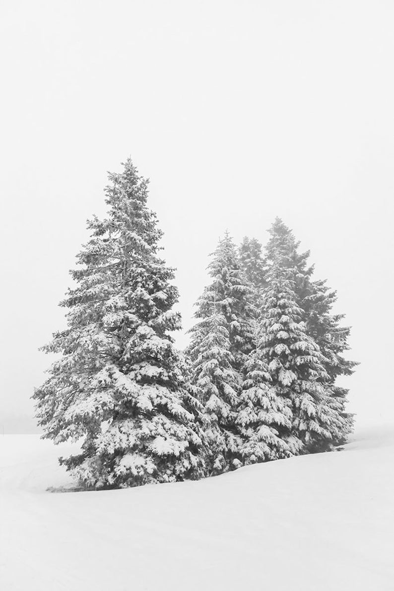 Snowy Pine Tree Printable Forest Print Tree Photography Winter Etsy In 2021 Tree Photography Nature Prints Snow Covered Trees