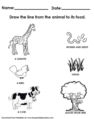 animal and its food worksheet kindergarden worksheets food chain worksheet worksheets. Black Bedroom Furniture Sets. Home Design Ideas