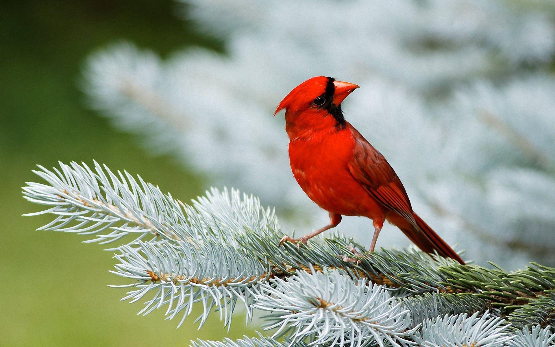 Park Art My WordPress Blog_Red Birds In A Tree Scrophularia Macrantha