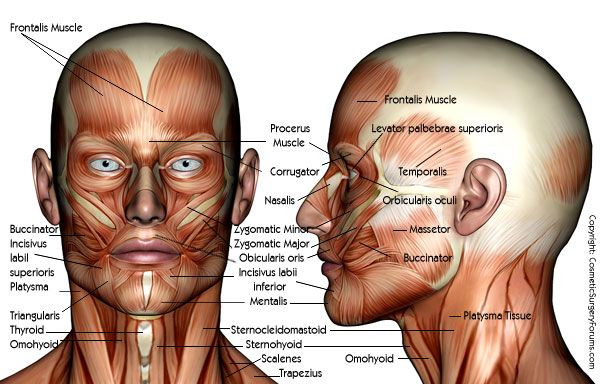 Muscle anatomy of the face and neck | Facial Anatomy | Pinterest ...