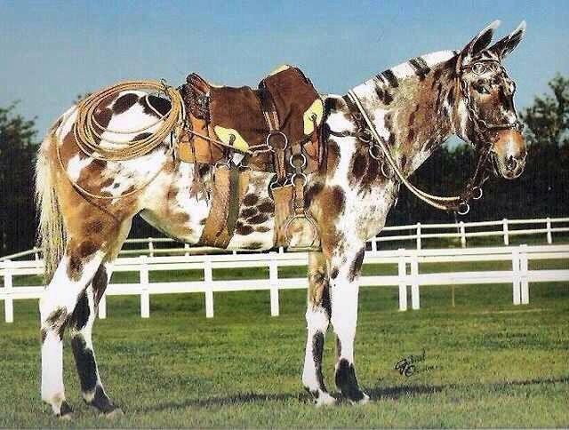 Rare Horse Coats rare colored ho...