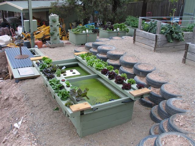 Really nice integrated aquaponic setup all built into the for Fish aquaponics garden