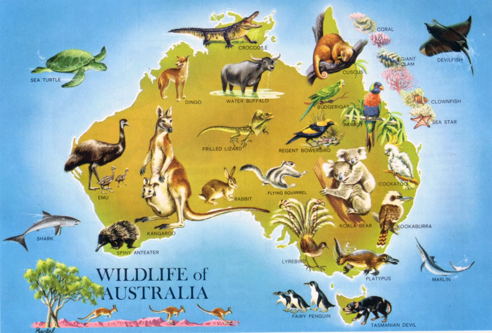 Large detailed wildlife map of Australia Australia