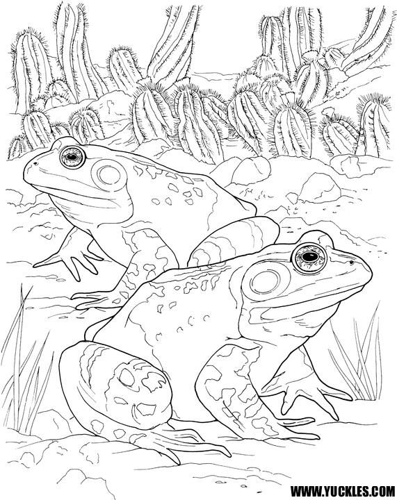 Toad coloring page | templates | Frog coloring pages ...